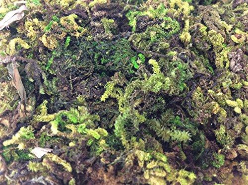 [Fake Moss Algae Thallophytic Plant Lichen Green Jardiniere Growing Plant Pot Flower Handmade] (Diy Tree Frog Costume)