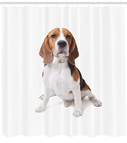 Ambesonne Beagle Shower Curtain Dog Posing Loving Puppy Furry Friend Companion Domestic Animal
