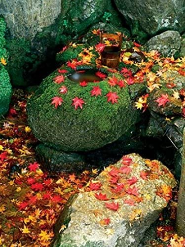 1art1 Jardines - Zen Garden, Kaede Póster Impresión Artística (40 x 30cm): Amazon.es: Hogar