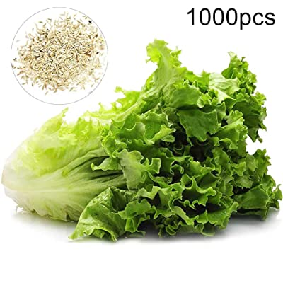 Lettuce Seeds, Outdoor Garden Bonsai Edible Nutritious Vegetable Plants Lettuce Seeds 1000pcs: Home & Kitchen
