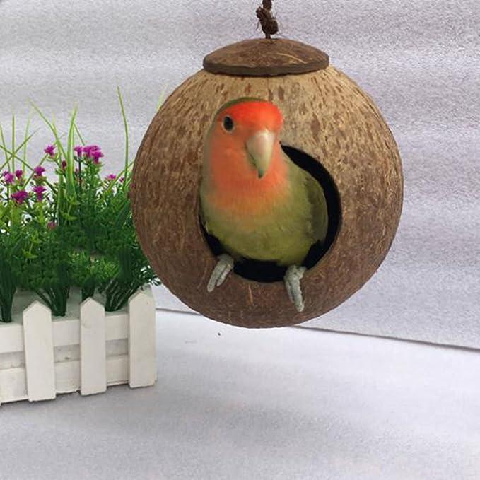 amyove Natural Coco carcasa Parrot diseño de caseta de nido casa jaula para pájaros: Amazon.es: Hogar