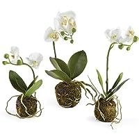 Porch & Petal DI1227 Phalaenopsis Drop-ins, Set of 3