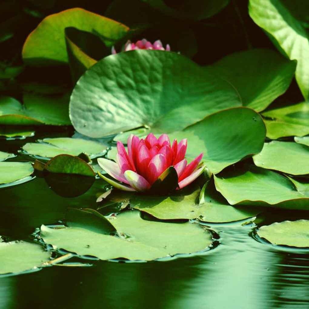 Masterein 5 pcs / Sac Beauté Fleurs Graines Bol Graines De Fleurs pour La Maison Décoration Jardin Plantation timlatte