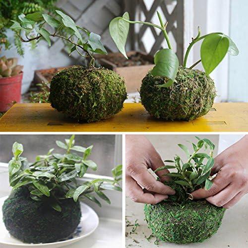 Bluelover 11Cm Cultivos Hidropónicos Musgo Seco Plantar Planta Bola Jardín Macetas Maceta Hidratante: Amazon.es: Hogar