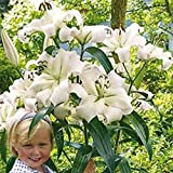 Best True Buds Pots - 200 PCS True Lily Bulbs (not lily seeds) Review