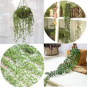 Gotian 2Pcs 78cm Hanging Wall Artificial Succulents Beads Green Vines Flower Lover Tears 42