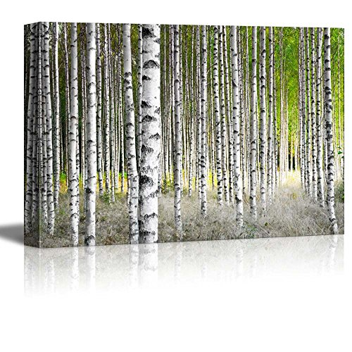 Canvas Prints Wall Art - Birch Trees in Bright Sunshine in Late Summer Modern