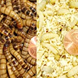 500ct Waxworms and 1000ct Superworms-Live Feeders, Fishing (Free Shipping) by Gimminy Crickets & Worms