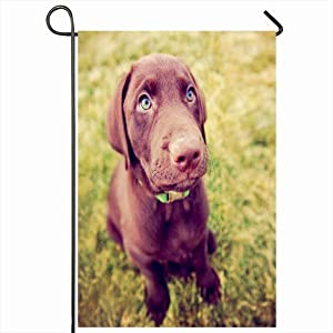 Onete Garden Flag 12x18 Inches Cute Chocolate Tiny Lab Puppy Sitting Pal Grass Animals Purebred Wildlife Pure Parks Small Outdoor Outdoor Seasonal Home Decor Welcome House Yard Banner Sign Flags
