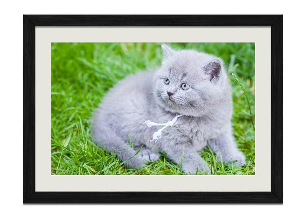 Amazon.de: CU. Rong Grau Katze im Grün Gras Holz Rahmen Poster Home ...