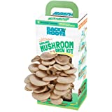 Back to the Roots Organic Mushroom Growing Kit, Harvest Gourmet Oyster Mushrooms In 10 days, Top Gardening Gift, Holiday Gift
