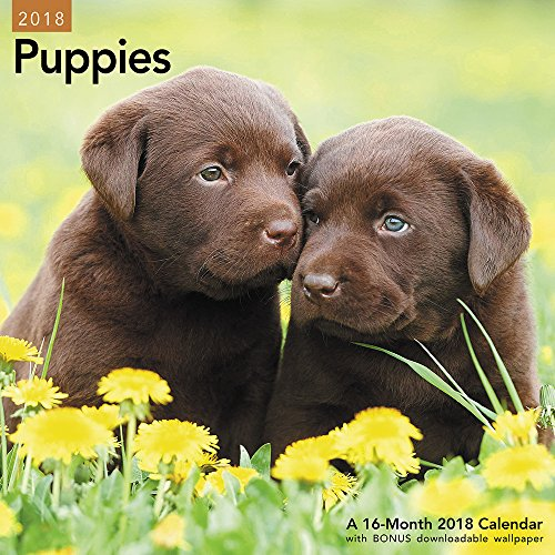 2018 Puppies Wall Calendar (Mead) cover