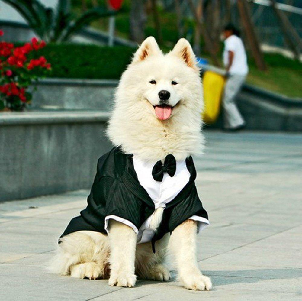 Amazon.com : big dogs tuxedo striped large dog wedding clothes ...