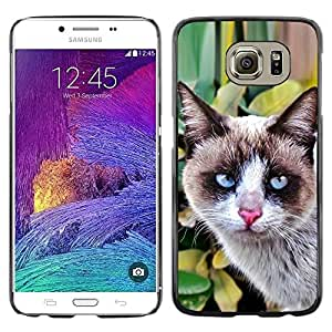 Be Good Phone Accessory // Dura Cáscara cubierta Protectora Caso Carcasa Funda de Protección para Samsung Galaxy S6 SM-G920 // Thai Snowshoe Breed Cat House Clever
