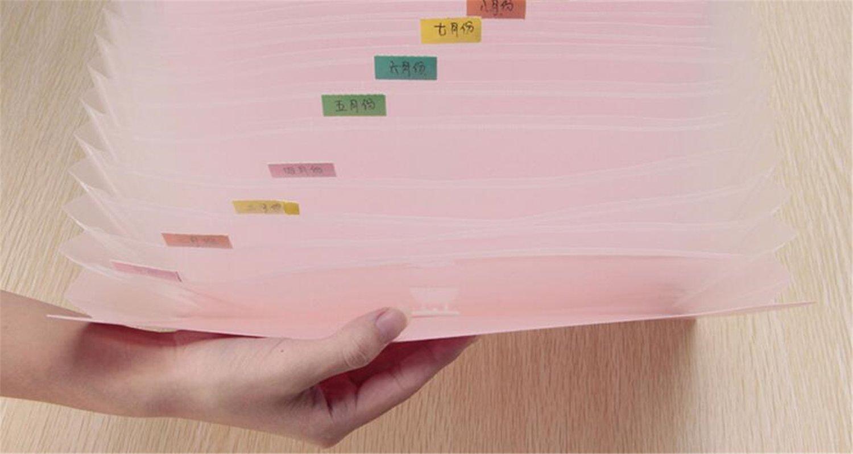 Amazon.com: Carpeta de acordeón expandible portátil de mano ...
