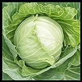Cabbage Seeds (Copenhagen Market) | Cabbage Seeds for Planting Outdoor Gardens | Heirloom & Non-GMO | Planting…