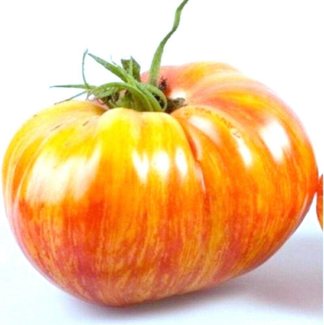 Kloius 100pcs graines de tomate g/éantes de jardinage /à la maison l/égume bio h/éritage Ensembles