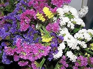 Flower Seeds Wavyleaf Sea - Lavender Mix (Limonium sinuatum) Annual