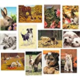 12 Pack of Pet Animal Birthday & Greeting Cards