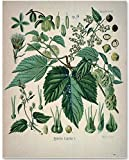 Hops Plant - 11x14 Unframed Art Print - Great Gift for Home Brewing Beer Maker, Home Bar or Man Cave Decor