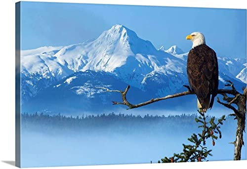 Bald Eagle Perched On Spruce Branch Canvas Wall Art Print