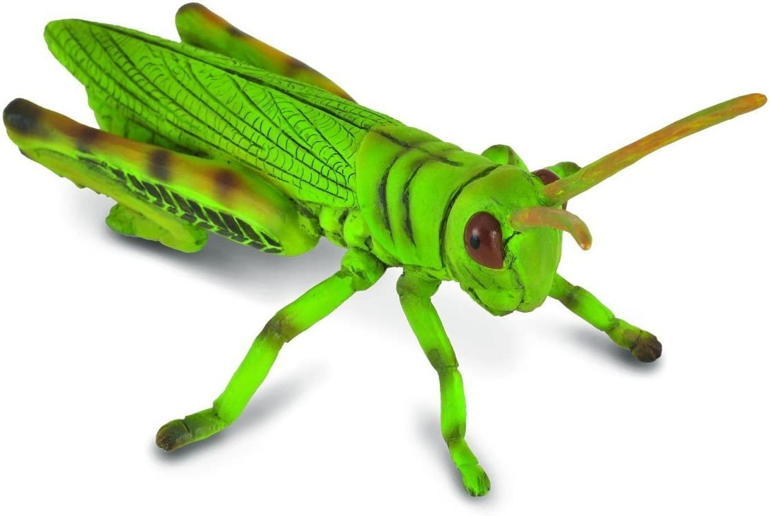 CollectA Insects Grasshopper Toy Figure - Authentic Hand Painted Model