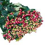 Farm2Door Wholesale Flower Combo Box: 40 Orange Hypericum Berries, 40 Red Hypericum Berries - Farm Direct Wholesale Fresh Flowers