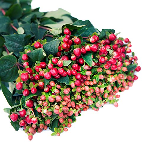 Farm2Door Wholesale Flower Combo Box: 40 Orange Hypericum Berries, 40 Red Hypericum Berries - Farm Direct Wholesale Fresh Flowers by Farm2Door