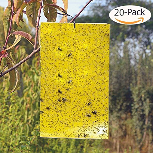 BestTrap 20-Pack Dual-Sided Yellow Sticky Traps for Flying Plant Insect Such as Fungus Gnats, Whiteflies, Aphids, Leafminers,etc- (6x8 Inches, Twist Ties Included) by BestTrap