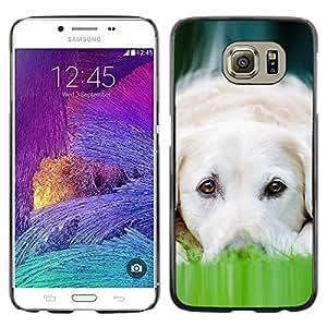 TopCaseStore / la caja del caucho duro de la cubierta de protección de la piel - Labrador Dog Pet Canine White - Samsung Galaxy S6 SM-G920