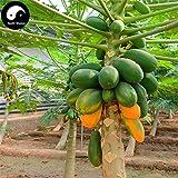 NooElec Seeds India Chaenomeles Sinensis Dwarf Organic Sweet Papaya -20 Seeds Pack