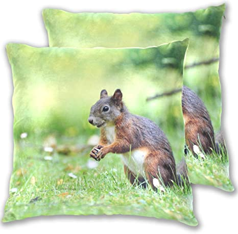 Amazon Com Ggq Cute Squirrel Throw Pillow Covers Cotton Wool Set Of 2 Pillow Cases For Your Home Playroom Kids Room And Others 18 X 18 Home Kitchen