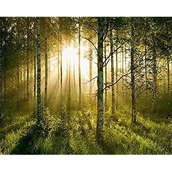 Amazoncom Enchanted Forest Huge Wall Mural 12 Feet 6 Inch Wide x 9