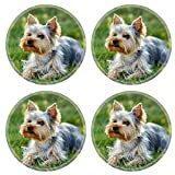 MSD Round Coasters Image ID 27154480 Cute small yorkshire terrier is lying on a green lawn outdoor no people