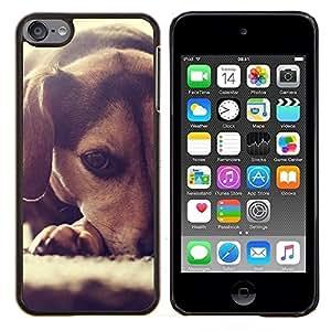 TECHCASE---Cubierta de la caja de protección para la piel dura ** Apple iPod Touch 6 6th Touch6 ** --Perrito del beagle Pequeño Perro raposero