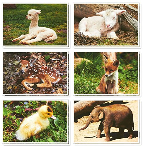 (36 Pack All Occasion Greeting Cards - Cute Baby Animal Pictures - Bulk Note Card Box Set with White Envelopes - Blank on the Inside - 4 x 6 Inches)