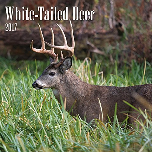 Turner Photo 2017 White Tailed Deer Photo Wall Calendar, 12 x 24 inches opened (17998940059)