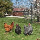 "Premier Enhanced 42"" Electric Poultry Net Fence, Green/Black, 12/42/3EG"
