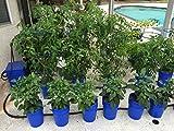Go Hydro Flexible Tomato Cage 48 Inch Multi Level