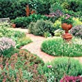 Herb Seeds Complete Selection of Assorted Varieties Sale Collection Zellajake
