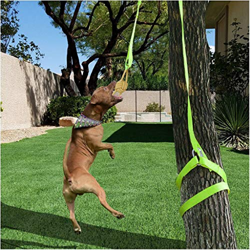 Hanging Bungee Dog Toy | Interactive Dogs Toys Rope Tug of War Toys for Medium or Large Dogs Outdoor Hanging Exercise Tugger, Safe & Fun Solo Play (from US, Multicolour)