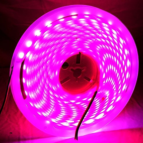 Magenta Led Lights