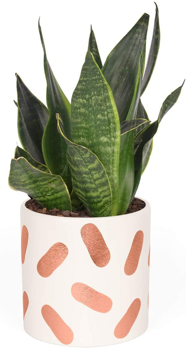 Take Care Indoor Planters - 4