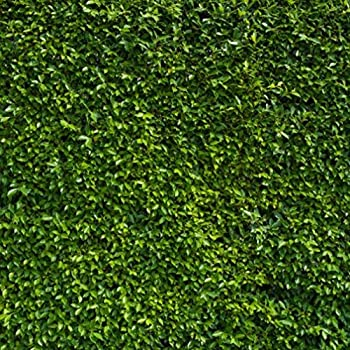 Amazon.com : Green Leaves Wall Photo Studio Backdrops