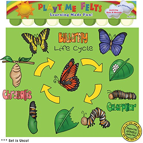 life cycle preschool - 8