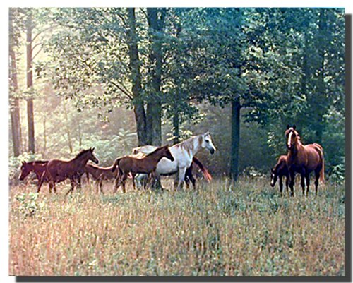 Horses in Pasture Wall Decor Poster Farm Animal Art Print Picture (16x20)