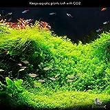 Rhinox Nano CO2 Diffuser - Keeps Aquarium Plants
