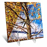 3dRose Alexis Photo-Art - Objects - Blue solar power panel in the autumn forest. Photosynthesis - 6x6 Desk Clock (dc_270321_1)