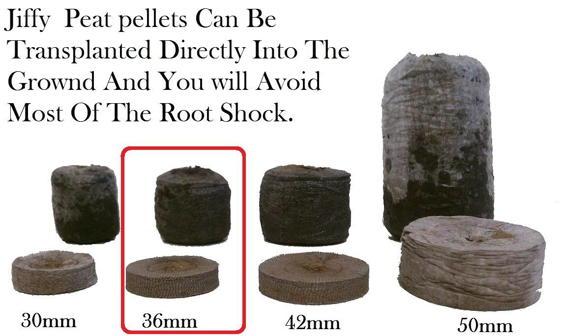 500 Jiffy 7 Peat Pellets 36mm - Seeds Starting - Jiffy Peat Pellet Helps to Avoid Root Shock - 500 Jiffy Peat Pellets 36mm by Jiffy (Image #2)