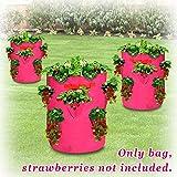 BenefitUSA Garden Planting Bag Grow Planter Bag Strawberry and Herb Plant Tub (3 PACK)